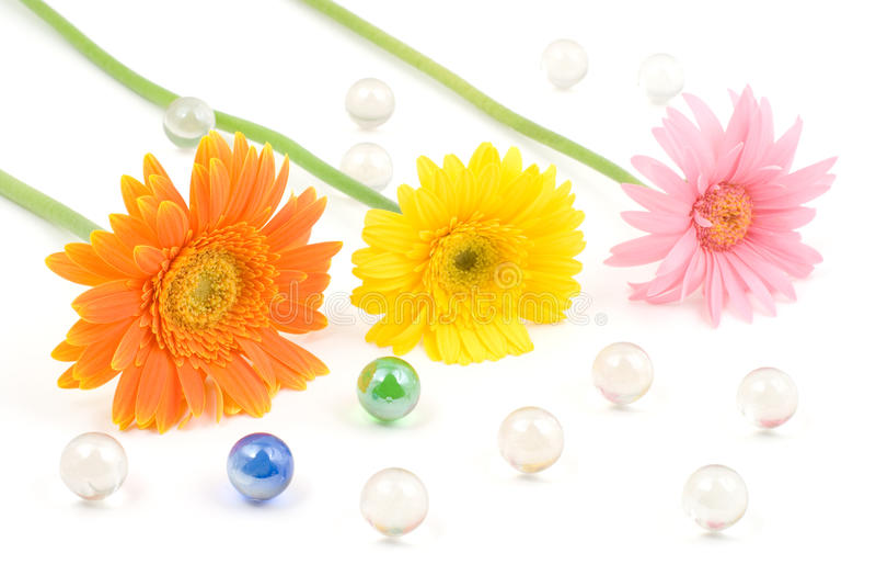 gerbera λουλουδιών μαργαριτών ρυθμίσεων στοκ εικόνες
