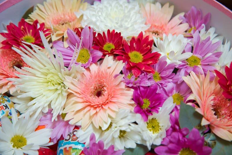 Gerbera и другие красочные цветки аранжированные как естественное фоновое изображение с белыми, желтыми, красными и розовыми цвет стоковое изображение
