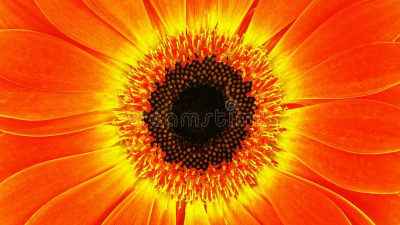 Download Gerbera stock image. Image of freshness, gardening, blossom - 25703845