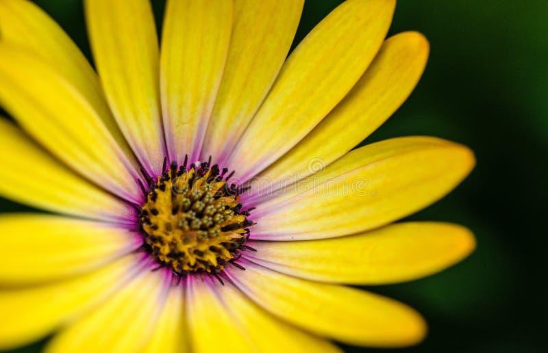 Цветок Gerbera Бесплатное  из Общественного Достояния Cc0 Изображение