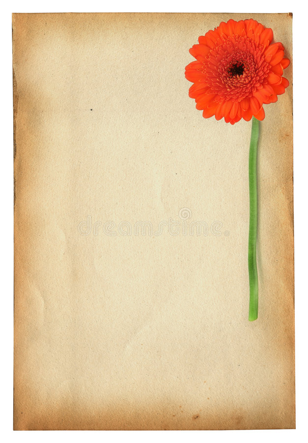 Download Gerbera against old paper stock photo. Image of copy, certificate - 3247252