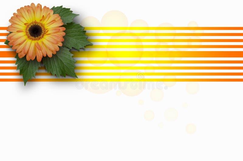 Gerbera alaranjado da grande flor nas folhas com círculos transparentes ilustração stock