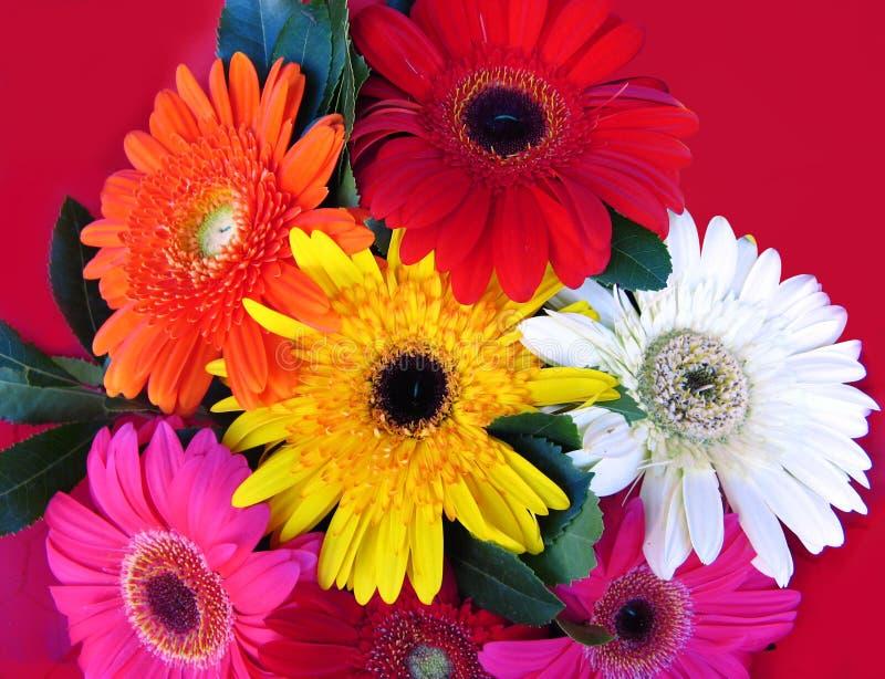 Gerbera bouquet stock photos
