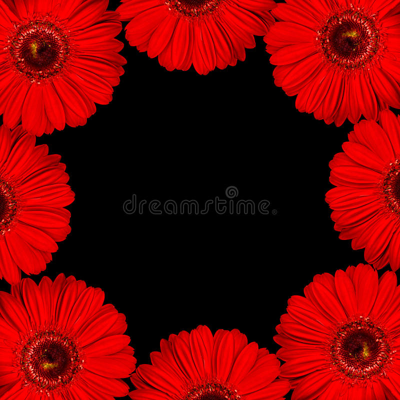 Download Bright Red Gerbera Flowers As Border On Black Back Stock Image - Image: 32729015