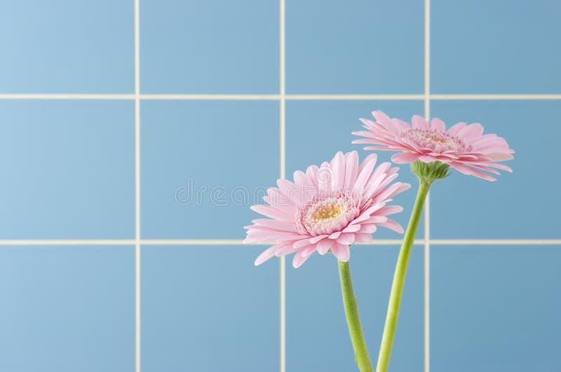 Gerbera cor-de-rosa fotografia de stock