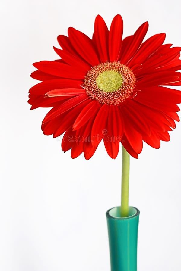 gerbera czerwieni waza obrazy stock