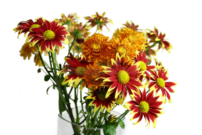 Download Gerbera Daisies stock image. Image of flora, flower, daisy - 460187