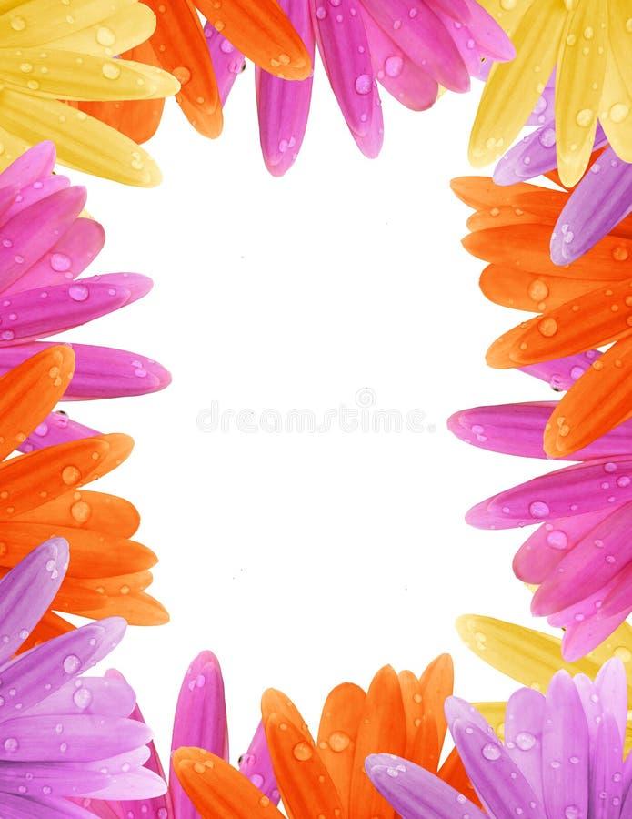 Download Gerbera Daisy Border stock photo. Image of drops, pastel - 26350994