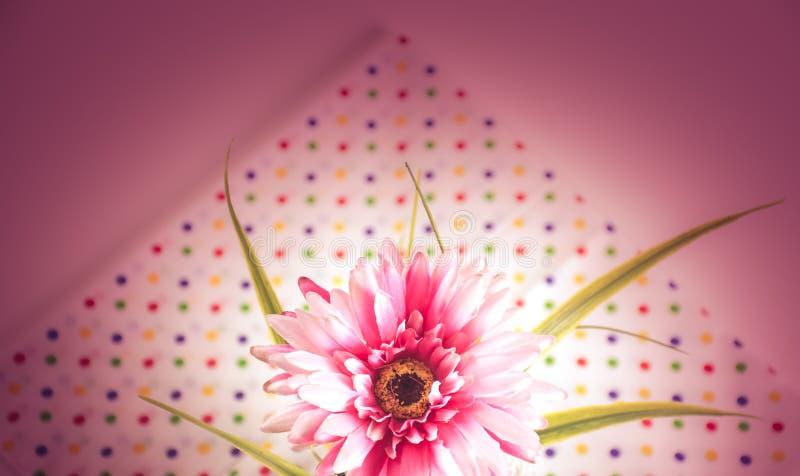 Gerbera dulce del color fotografía de archivo libre de regalías
