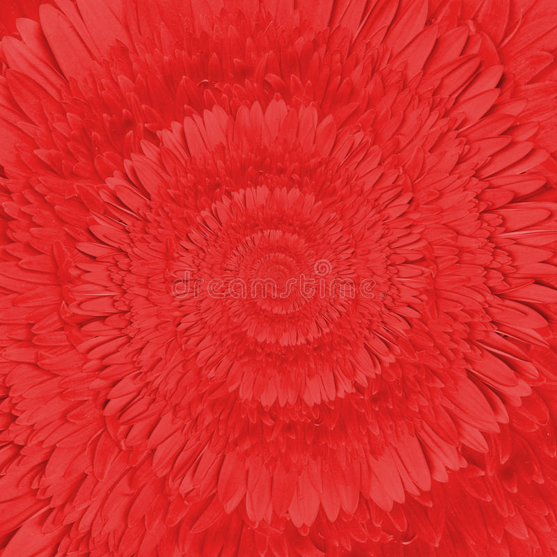 Gerbera flower infinity spiral abstract background royalty free stock image
