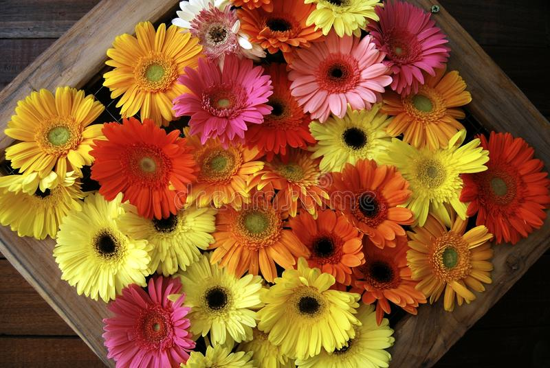 Gerbera flowers arranged in a picture frame stock photos