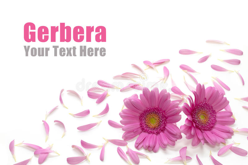 Download Gerbera Frame Stock Photos - Image: 20734173