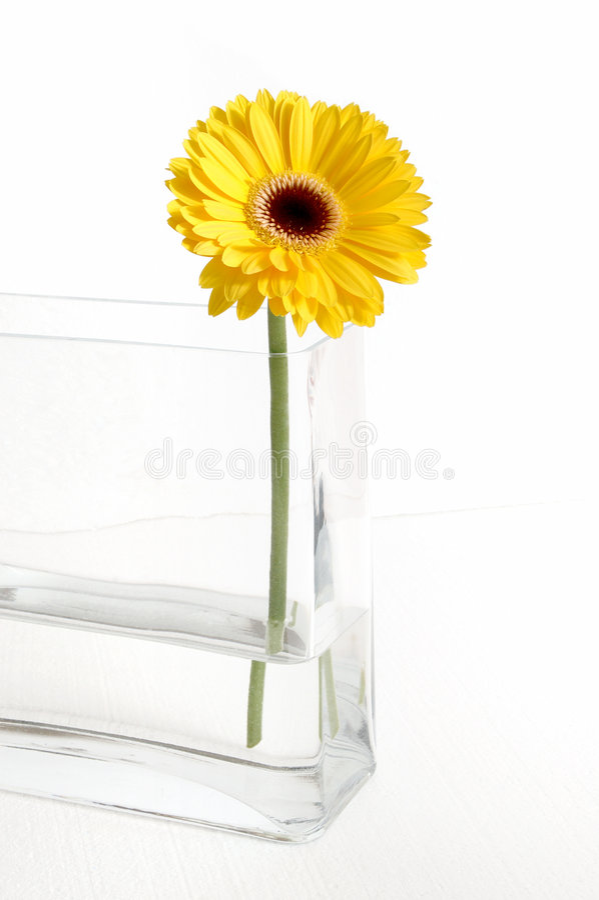 Gerbera giallo immagine stock