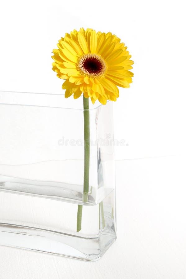 Download Gerbera jaune image stock. Image du isolement, paix, vase - 53551