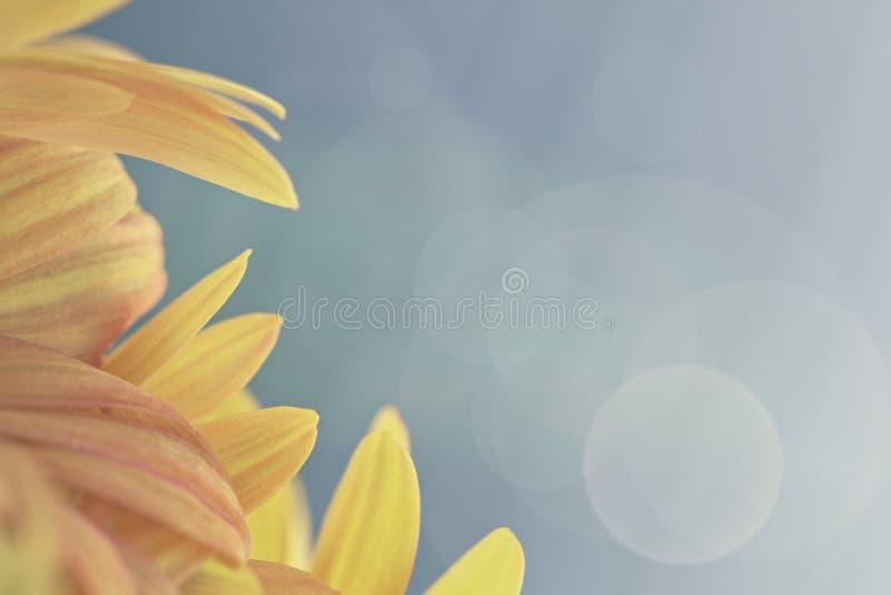 Gerbera kwiatu granicy tła projekt fotografia stock