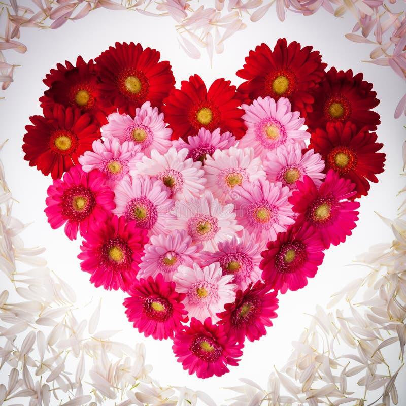 Gerbera kwiatu serce z płatkami obraz royalty free