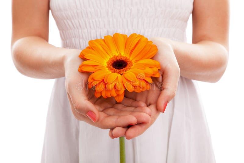 gerbera mienia pomarańcze kobieta zdjęcia royalty free