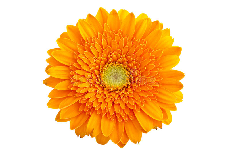 Gerbera orange parfait photographie stock