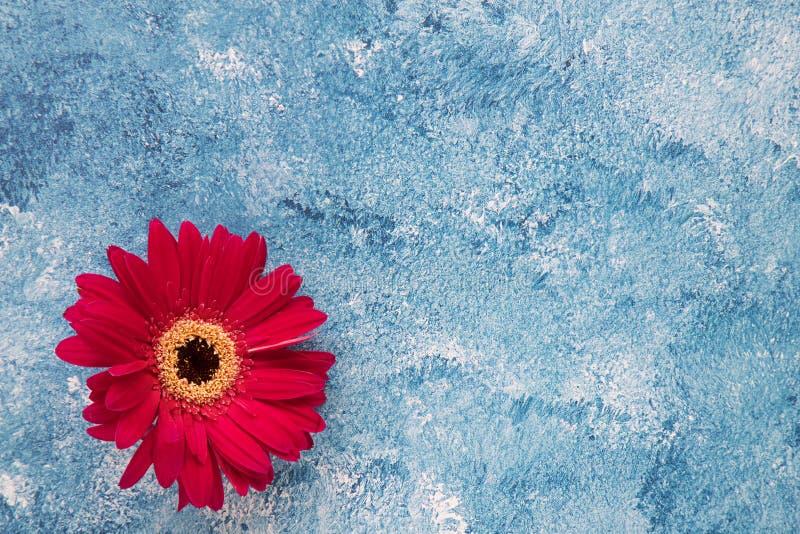 Gerbera rojo brillante en fondo azul y blanco de la pintura acrílica fotos de archivo libres de regalías