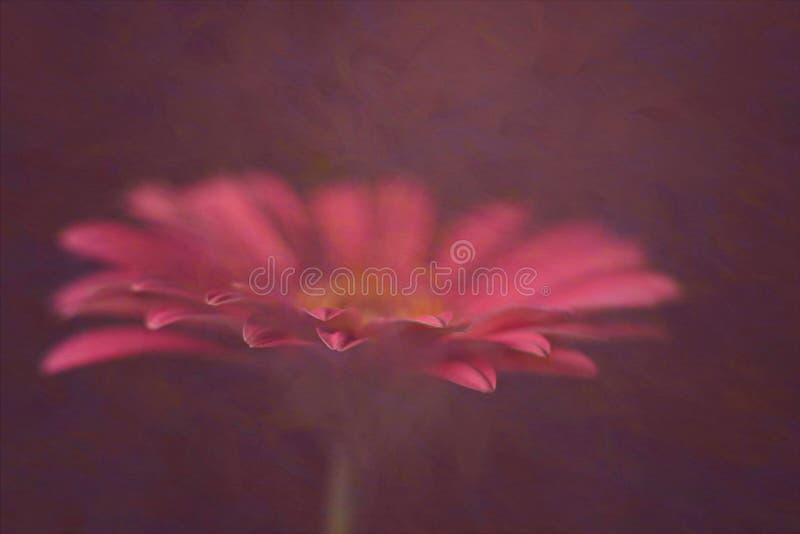 Gerbera rosa nel fondo strutturato immagine stock