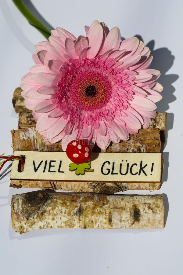 Gerbera rosado con la buena suerte, fondo blanco fotografía de archivo libre de regalías