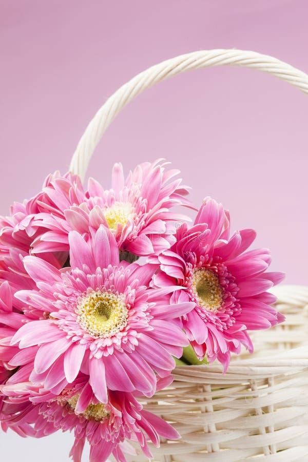 Gerbera rosado en cesta con cierre rosado del fondo para arriba imagen de archivo