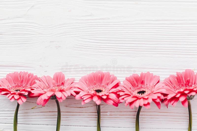 Gerbera rosado en el fondo de madera blanco, endecha plana con el espacio f foto de archivo libre de regalías