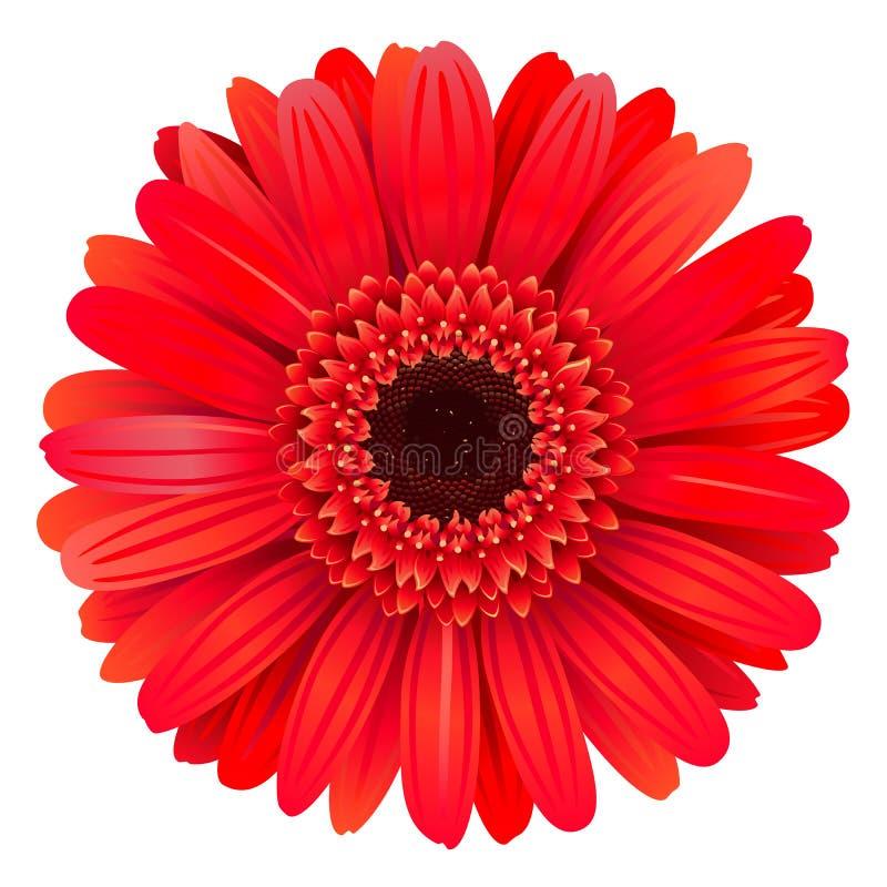 Gerbera rouge de vecteur illustration de vecteur