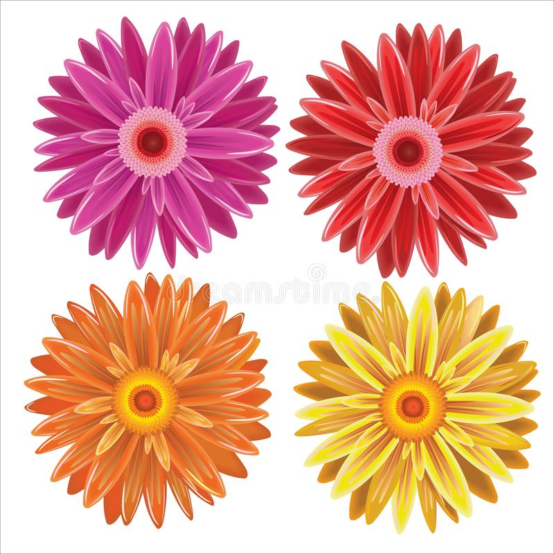 Gerbera - set of vector different colors flowers stock image