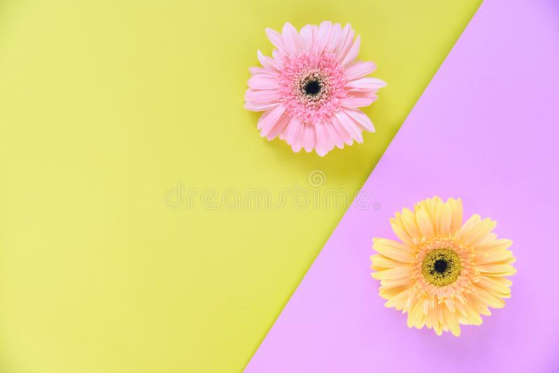 Gerbera spring flowers fresh on flower frame composition tropical plant on colorful pink and yellow background stock photography