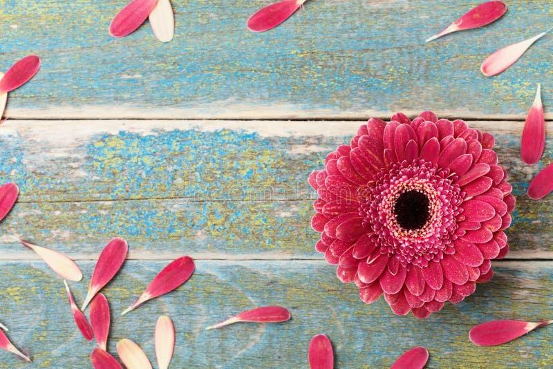 Gerbera stokrotki kwiatu naturalna rama od płatków dla matki lub kobiety dnia Kartka z pozdrowieniami pojęcie Vinatge styl Odgórn fotografia royalty free