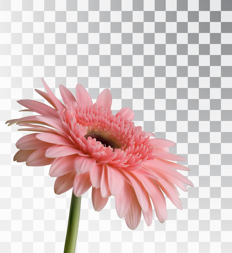 Gerbera On A Transparent Background Stock Vector