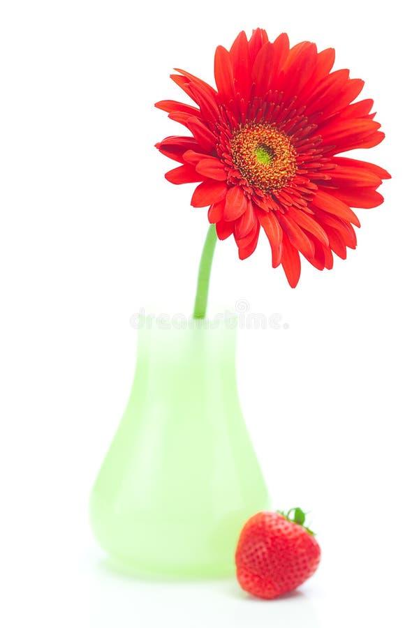 Gerbera in vaso e fragole immagine stock libera da diritti