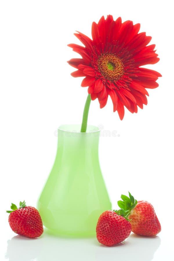 Gerbera in vaso e fragole fotografia stock