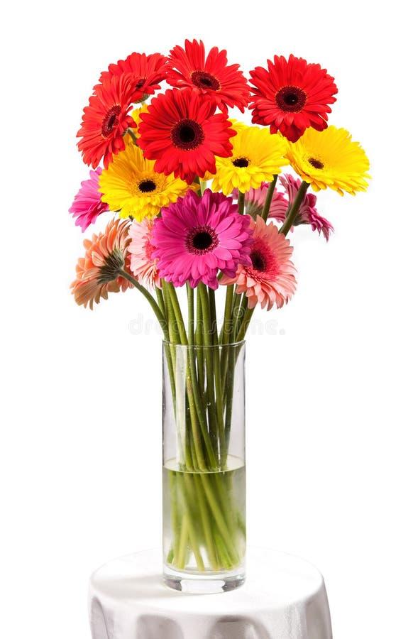 Gerberaen blommar i vasen som isoleras över vit royaltyfria foton