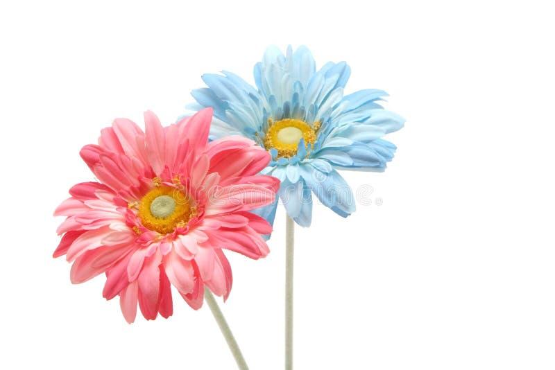 Gerberagänseblümchenblumen stockfotos