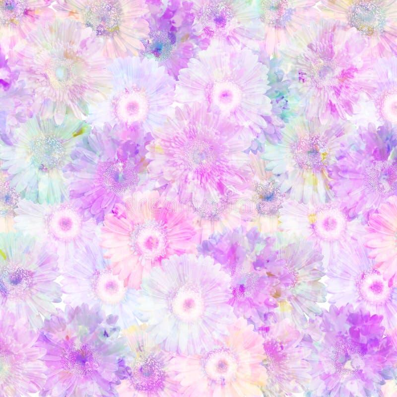 gerberas淡紫色粉红色 免版税库存图片