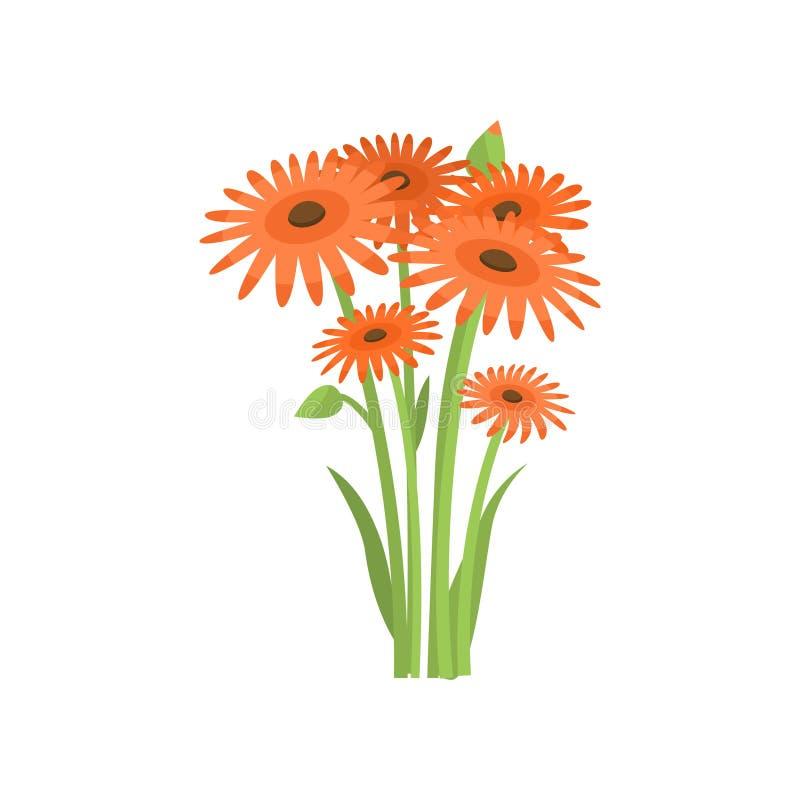 Gerberas alaranjados da abundância que crescem no canteiro de flores no fundo vazio ilustração stock