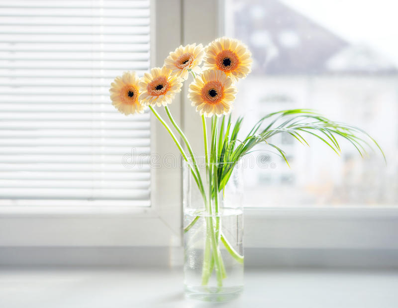 Gerberas bouquet in vase on the windowsill with bright daylight royalty free stock image