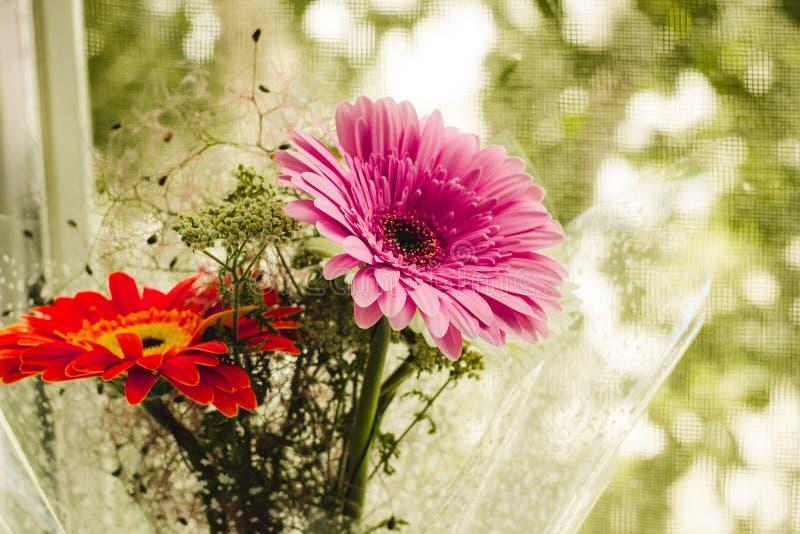 Gerberas multicolores en la ventana en verano foto de archivo libre de regalías