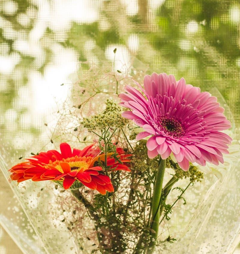 Gerberas multicolores sur la fenêtre en été images libres de droits