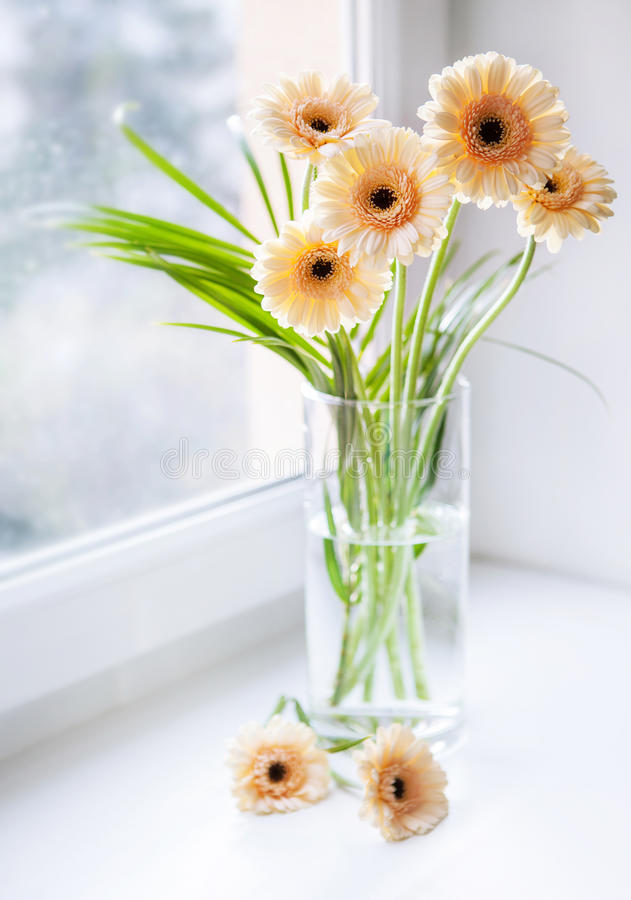 Gerberasboeket op de vensterbank met helder daglicht stock afbeeldingen