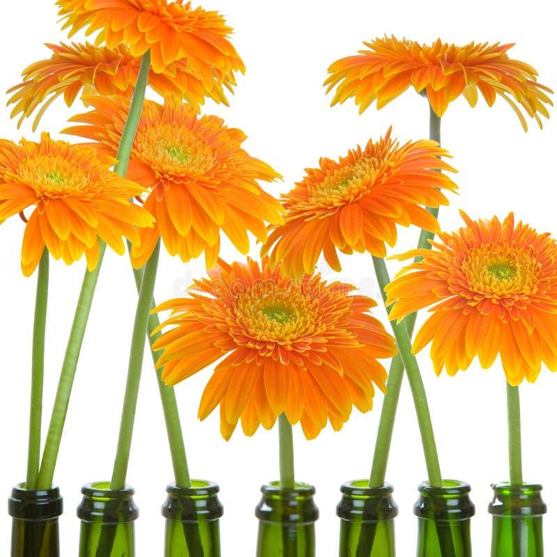 Download Gerbers in Bottles stock photo. Image of nature, bloom - 18112844