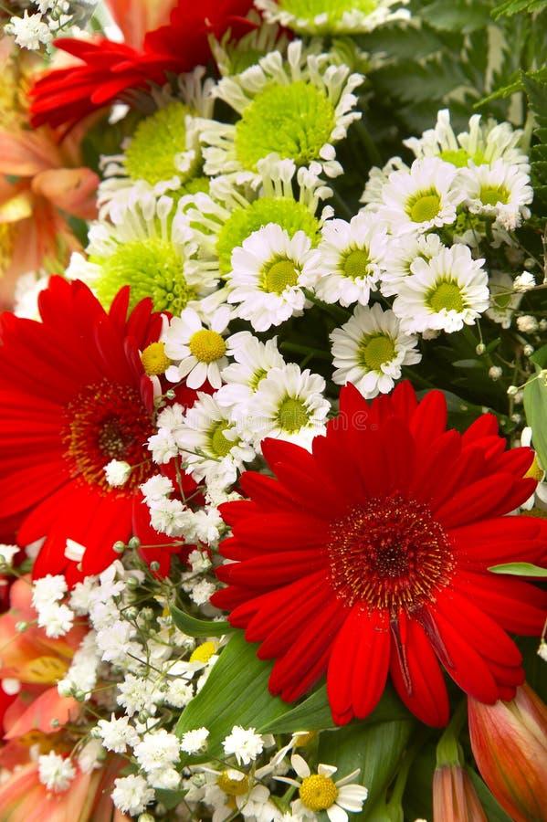 Gerbers e fiori fotografie stock