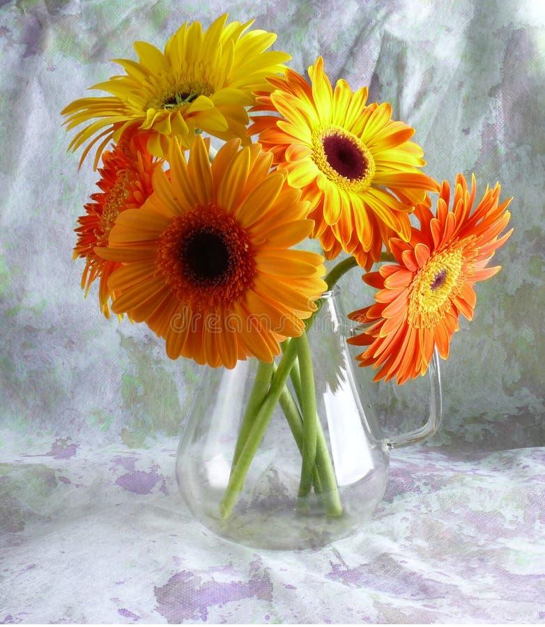 Gerbers gialli fotografie stock libere da diritti