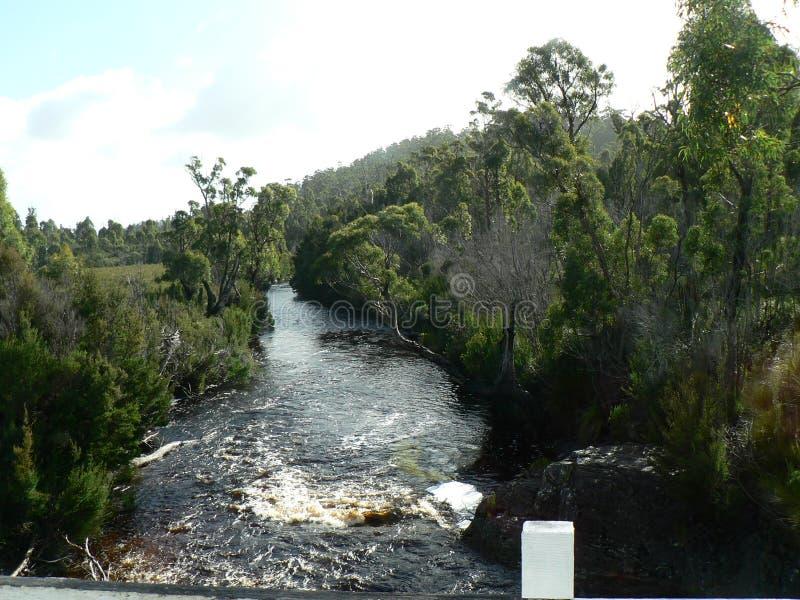 Gerbsäure in Tasmanien-Wasser stockbild