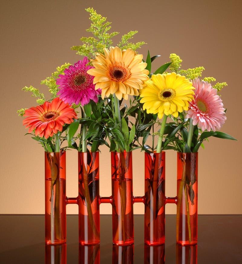 Gerbs coloridos no vaso alaranjado no fundo ambarino com pasto verde foto de stock royalty free