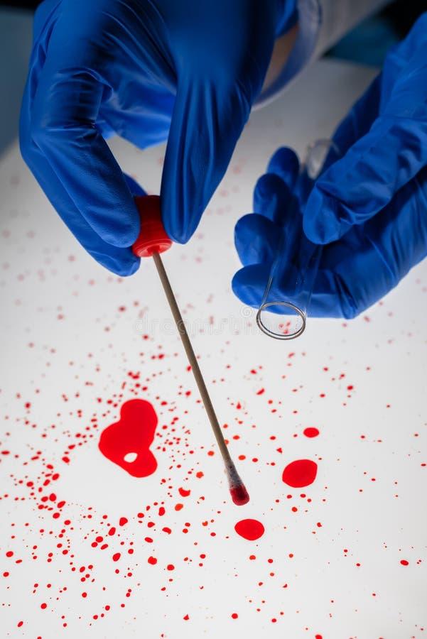 Gerechtelijke technicus die DNA-steekproef van bloedvlek nemen stock afbeeldingen