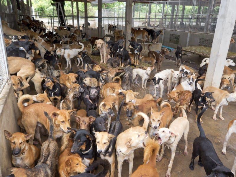 Geredde honden van vleesmaffia stock foto's