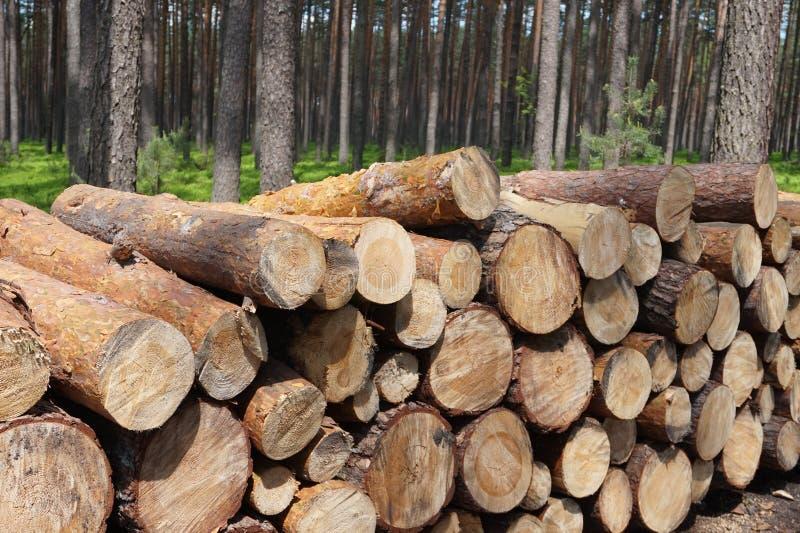 Geregistreerd hout in bos royalty-vrije stock foto